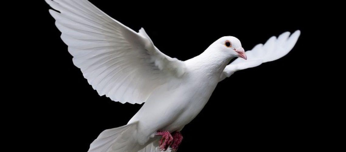 bird-3098446_640