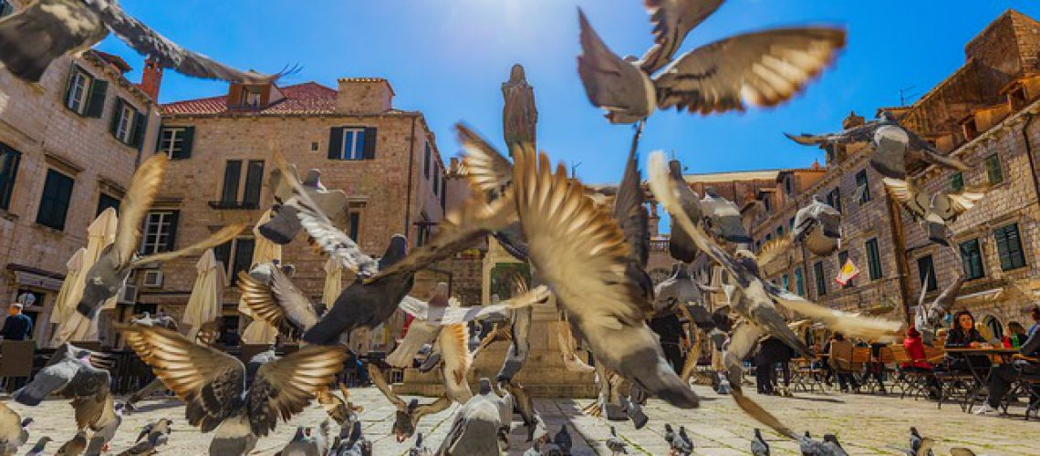 pigeons-3807277_640